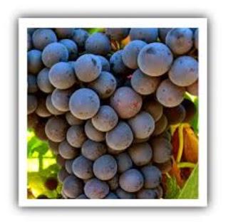 Degustación de vinos jóvenes de garnacha (viernes, 20)
