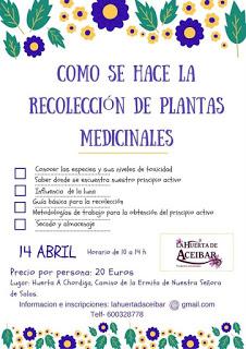 HUESCA. Curso para aprender a recolectar plantas medicinales (sábado, 21)