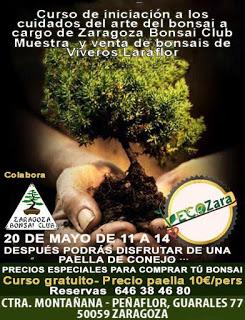 Curso de iniciación al bonsai (domingo, 20)