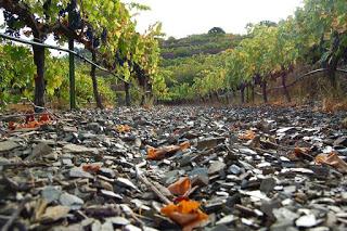 Degustación de vinos de mencía (viernes, 13)