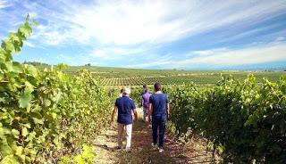 BARBASTRO. Visita a bodega LAUS y cata de vino (desde el 25 de agosto)