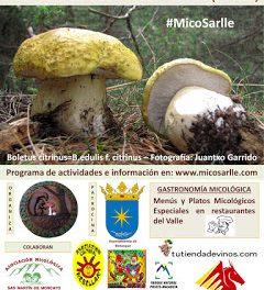 CERLER. Jornadas micológicas (fines de semana del 7 al 29)