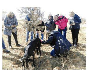 Excursión a la caza de trufas (domingo, 7)