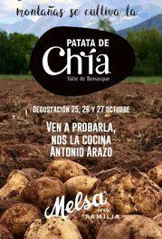 Degustación de patata de Chía (días 25 a 27)