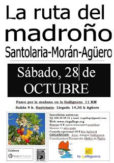 SANTOLARIA. Ruta del madroño (sábado, 20)