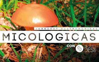 Jornadas Micológicas en EL FORO (hasta final de noviembre)