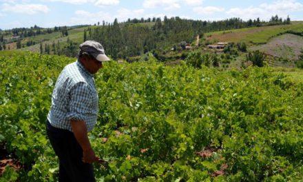 Degustación de vinos de vignerons (viernes, 30)