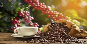 camino cafe