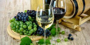 Cata vinos feb