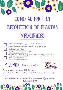 Taller de recolección de plantas medicinales