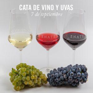 Cata de vino y uvas en ENATE