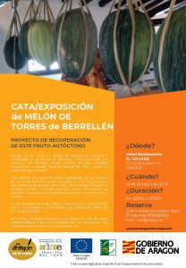 gallur MELÓN DE TORRES DE BERRELLÉN (1)