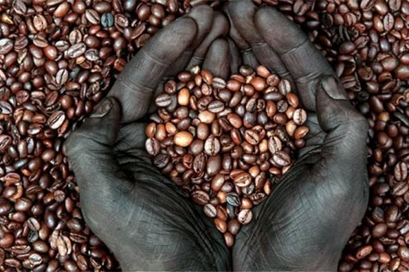 Degustación de café de comercio justo