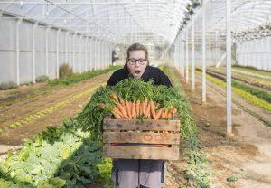 semonia zanahorias