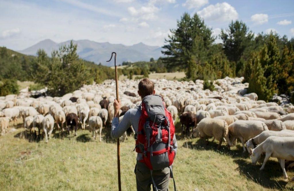 Tras los ojos del pastor - Zacarías Fievet