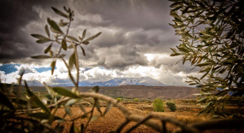 Olivo y Moncayo - DOP Aceite Sierra del Moncayo