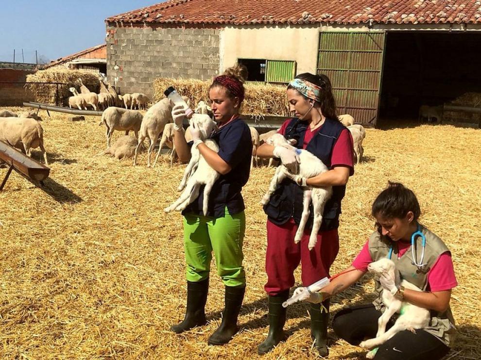 Erasmus Rural