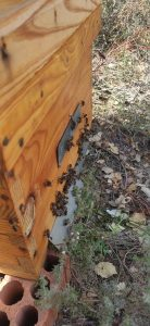 ECO IAF abejas